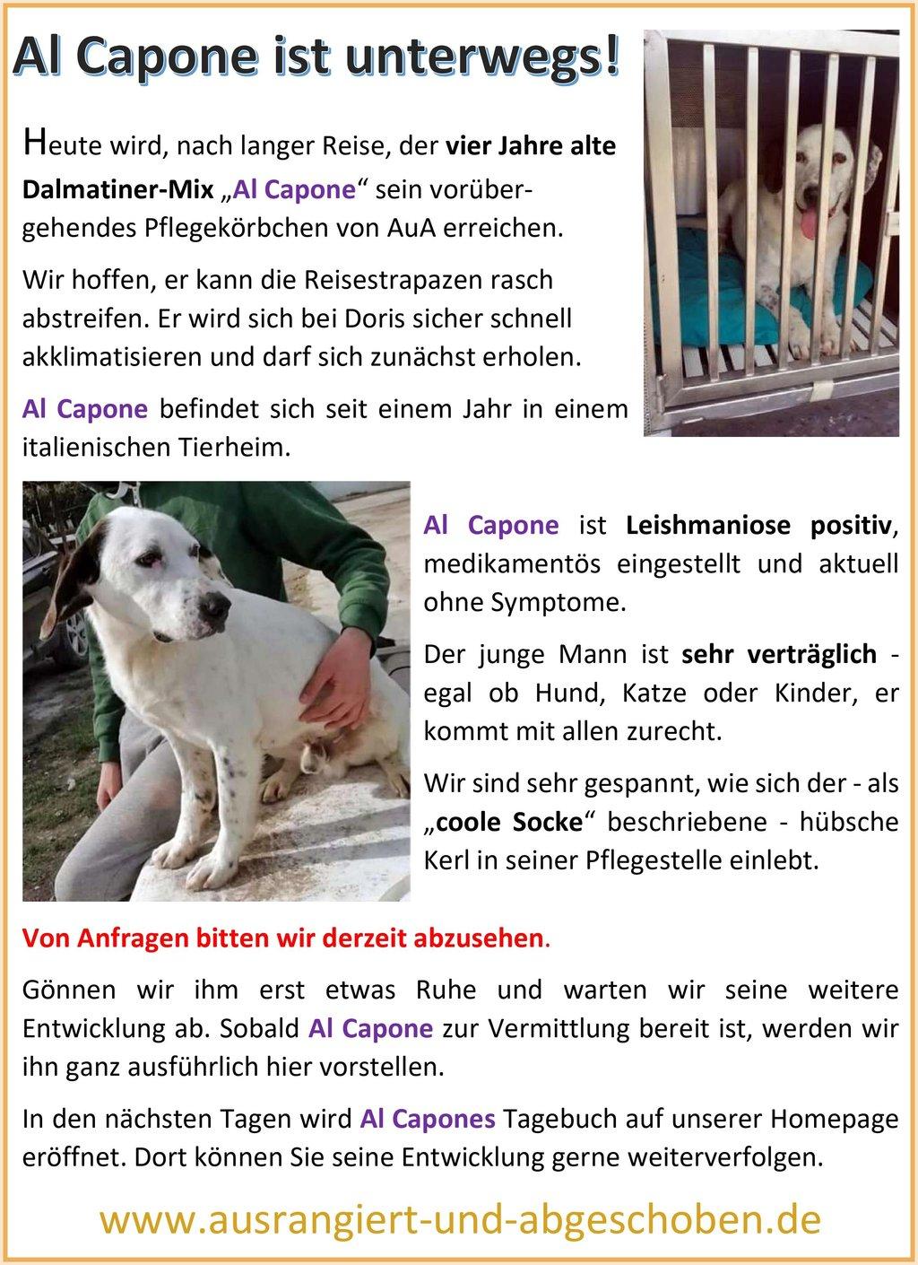 Bilder von Hund Al Capone, der auf seine Pflegestelle zieht.