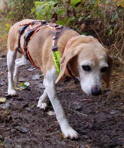 Hund Amelie beim Spazieren gehen