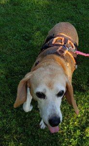 Hund Amelie im Garten