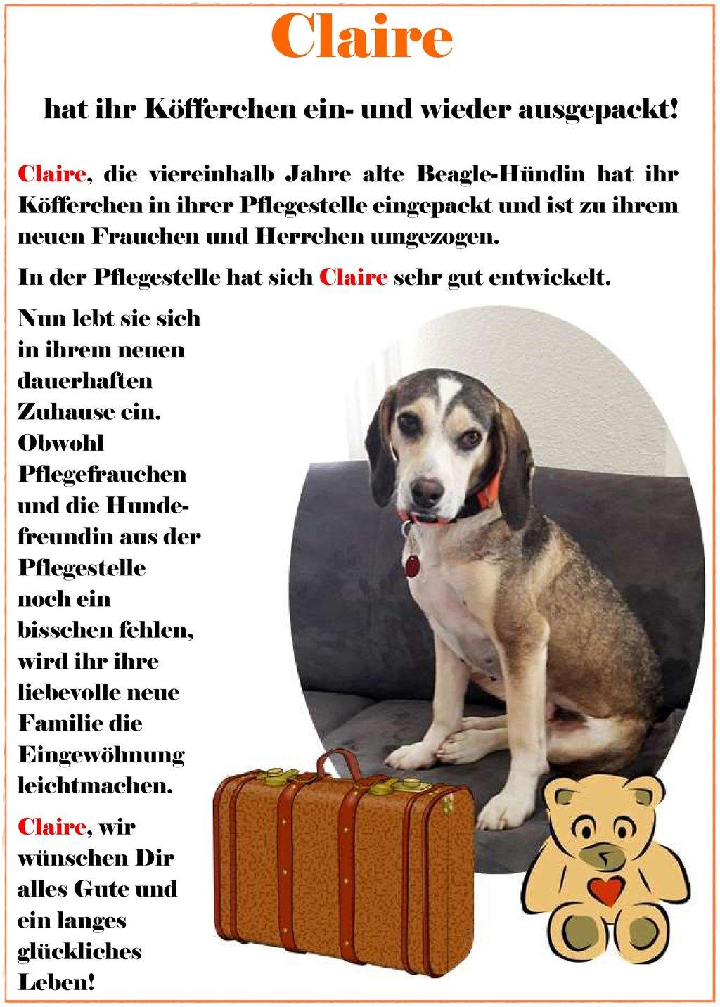 Die Erfolgsgeschichte von Hund Claire