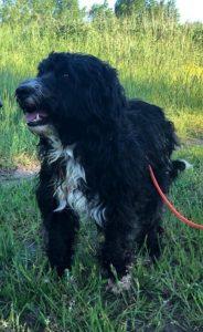Hund Diego steht im Gras