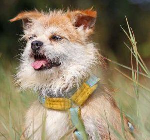 Hund Felicie sitzt im Gras