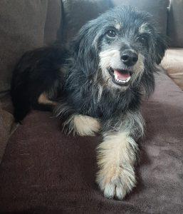 Bild von Hund Freddy der auf der Couch liegt