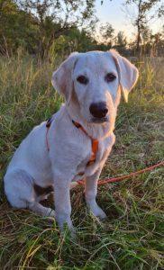 Hund Gino sitzt im Gras
