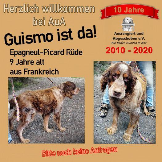 Bilder von Hund Guismo