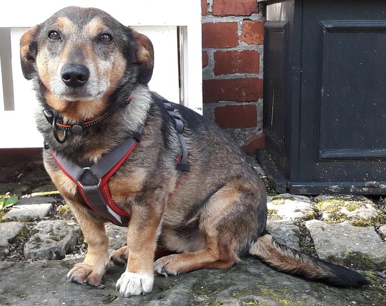 Hund Joschi sitzt vor der Tür