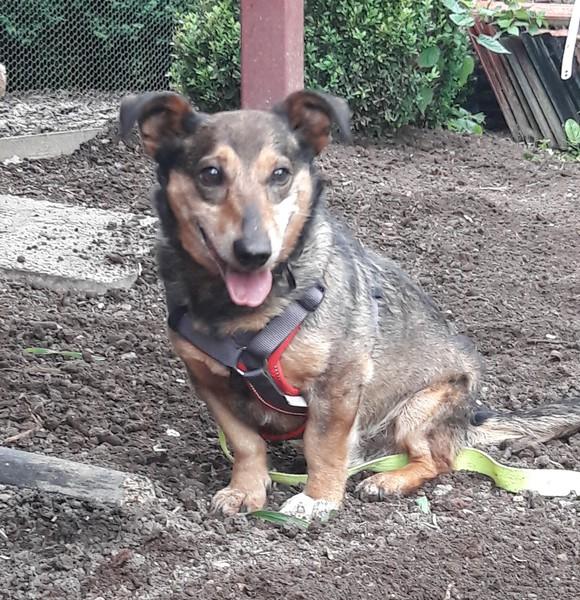 Joschi sitzt im Garten