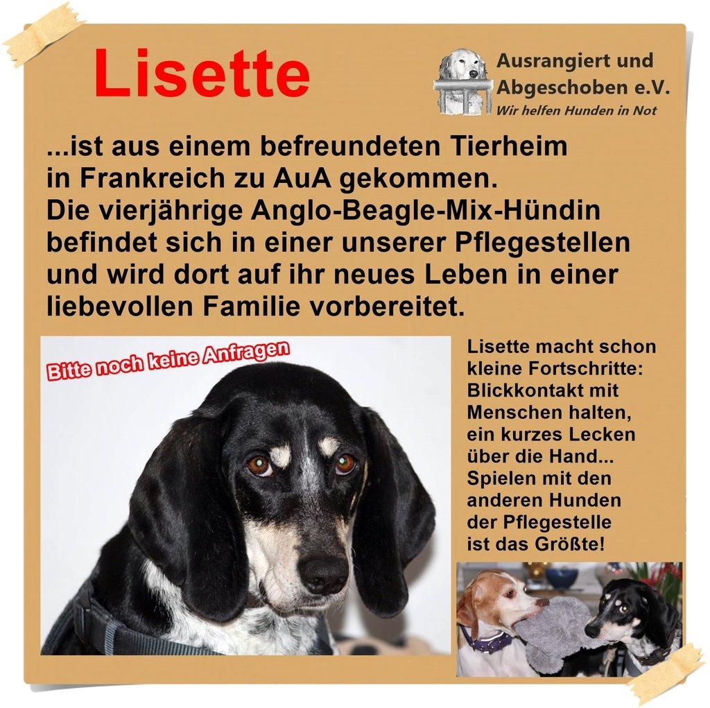 Update wie sich Hund Lisette auf ihrer Pflegestelle macht.