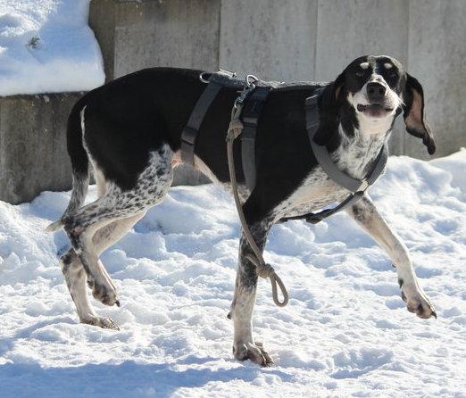 Hund Lissy komplett im Profil