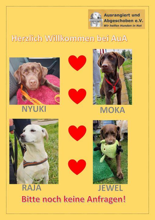 Bilder von 4 neuen AuA Hunden