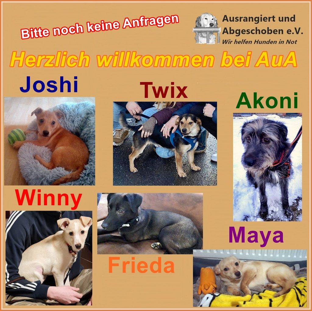 Bilder von den neuen AuA Hunden vom 30.01.