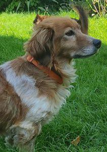 Profilbild von Hund Ornella