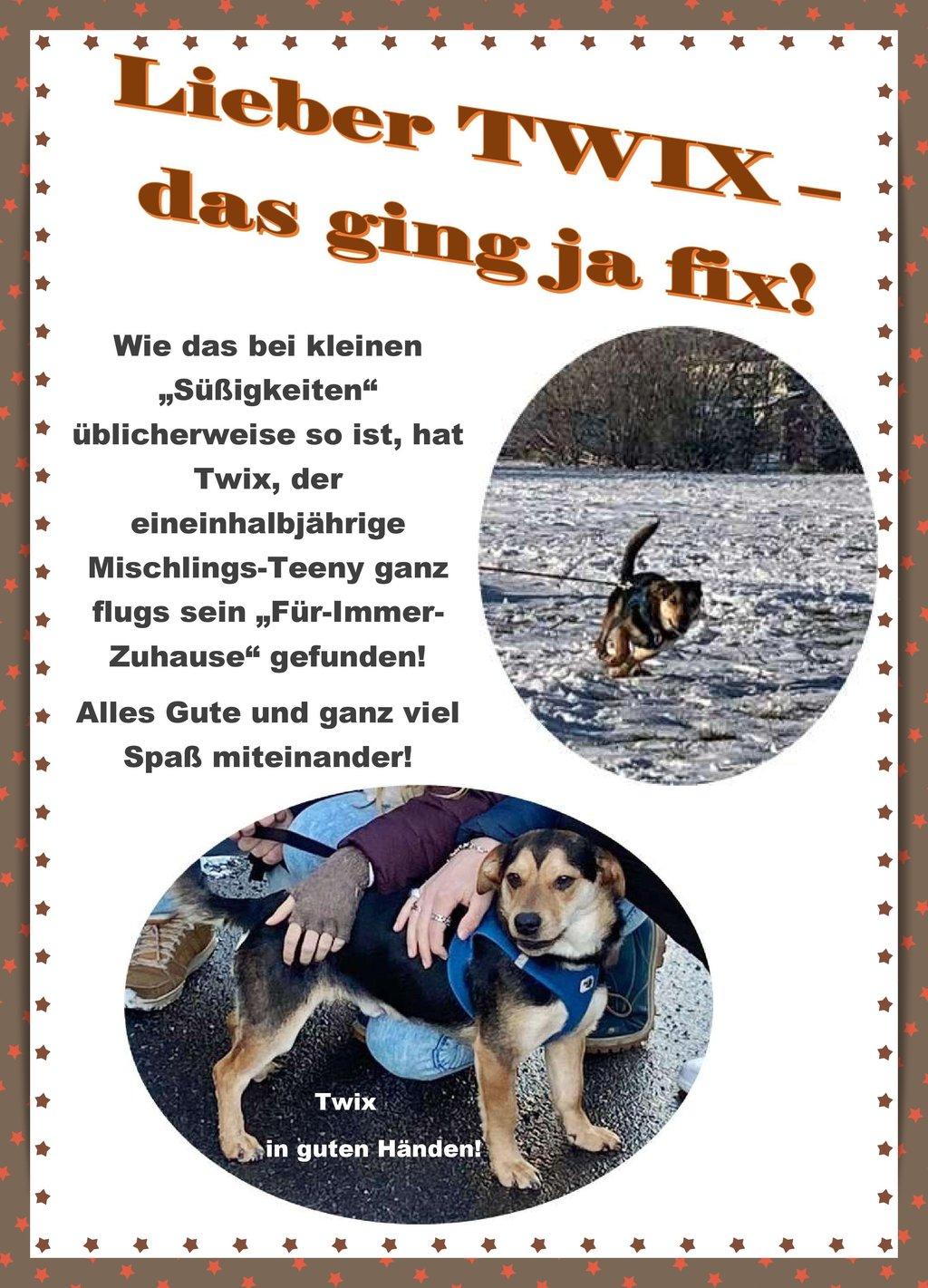 Die Erfolgsgeschichte mit Bildern von Hund Twix