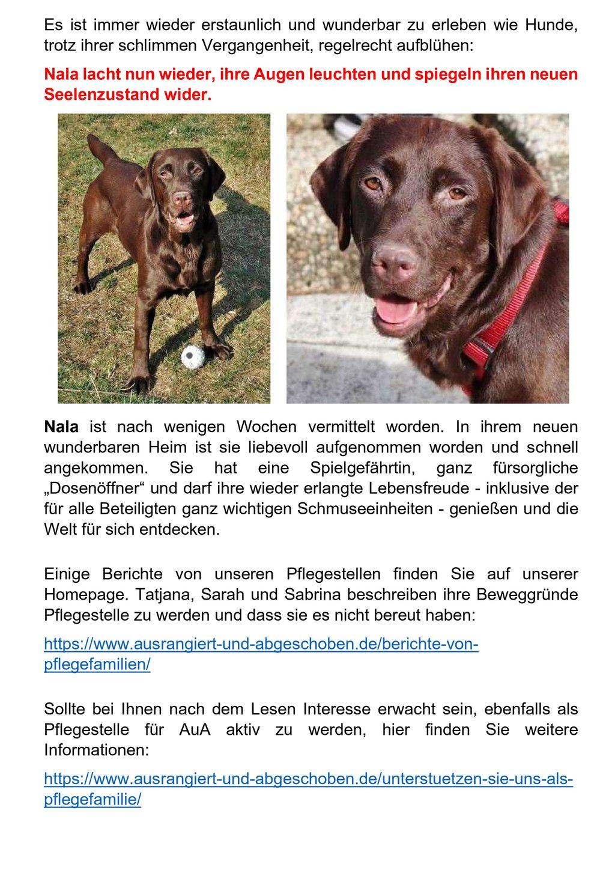 zweiter Teil unsere Pflegestellen mit Bildern von Hunden