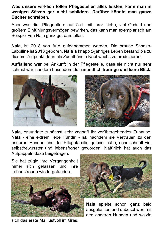 Der Text zu unserem Pflegestellen mit Bildern von Hunden.