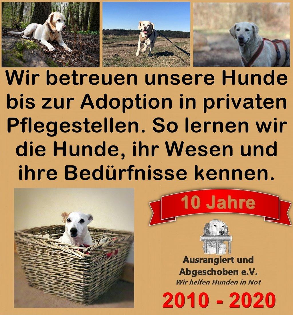 Bilder von Hunden vom Verein und Text zu Betreuung
