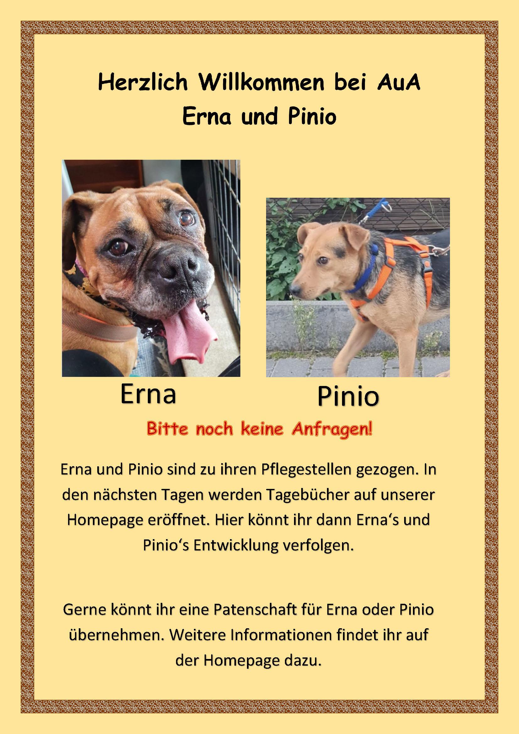 Text zu Erna und Pinio
