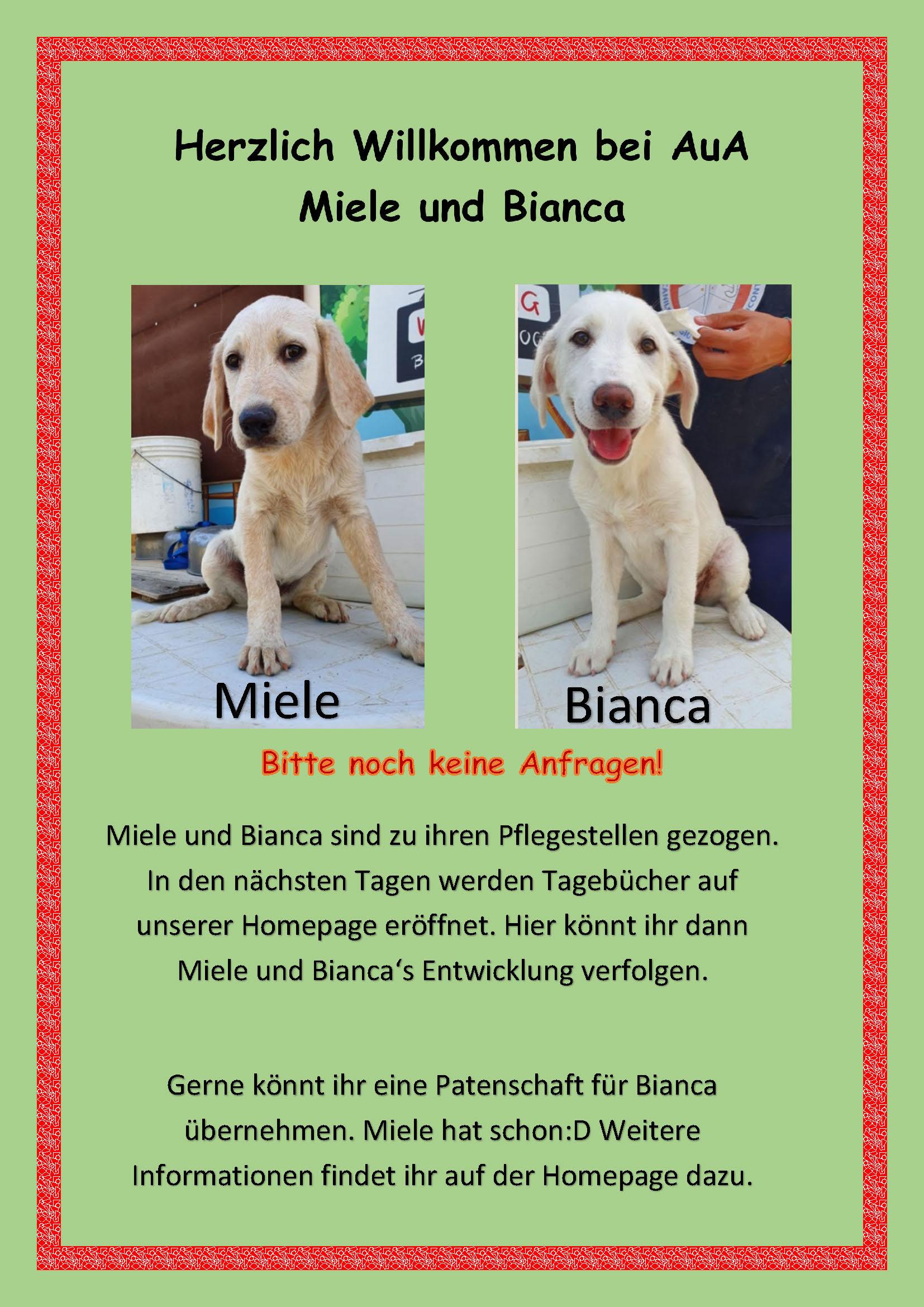 Hunde Miele und Bianca