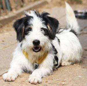 Hund Oskar schaut frech in die Kamera